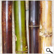 Varnished Bamboo 3In X 8Ft (pack 4 poles)