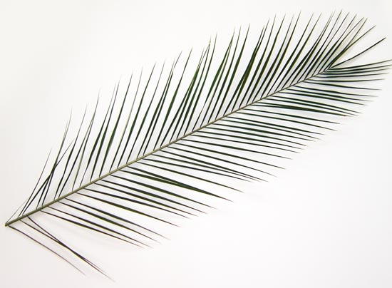 how to draw tropical leaf